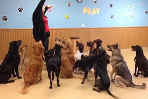 Columbus OH Doggie Daycare