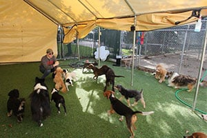 Doggie Daycare in Columbus OH